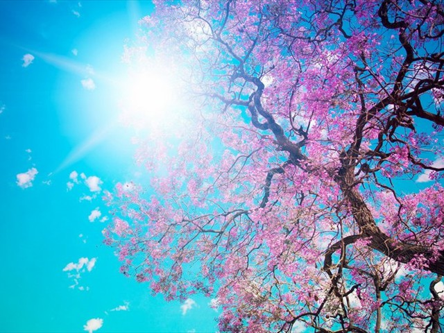 beautiful_spring_blossom_trees10